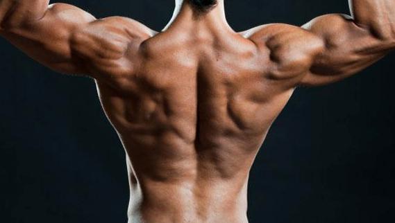 「逆三角 筋肉」の画像検索結果