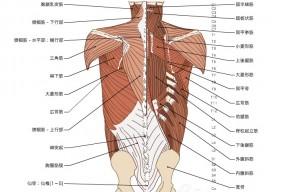 背骨と背中の解剖学