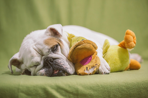 """睡眠でお悩みの方には筋トレがオススメ。""""睡眠の質""""が変わります。(ただし条件付き)"""