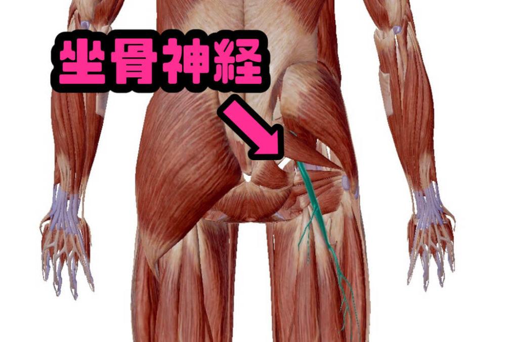坐骨神経痛でも筋トレを続けるとどうなるのか。一時的に痛みが消える方法も発見しました。