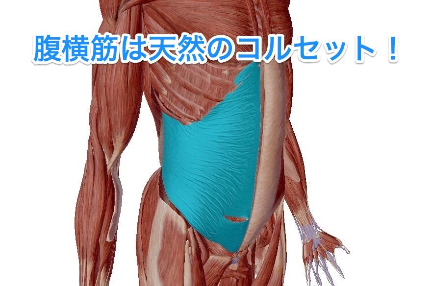 内臓が下がった?下っ腹がぽっこり?もしかしてだけど腹横筋を鍛えれば改善するかも。