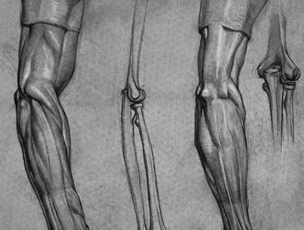 【肘ストレッチ】筋トレで肘が痛い人にオススメ。私はこの方法で痛みが緩和されました。