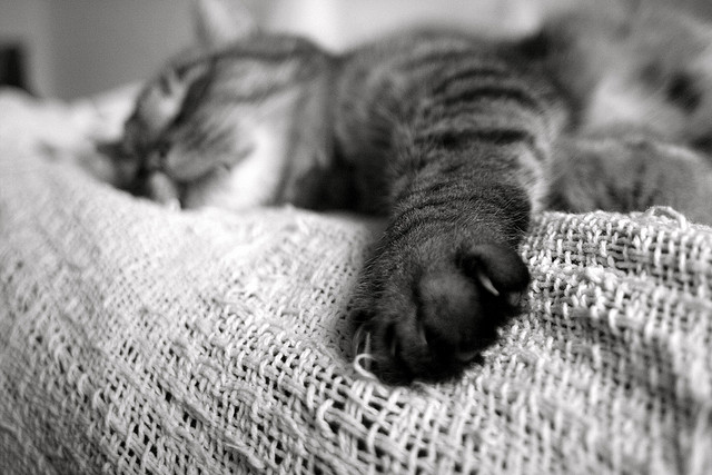 """""""睡眠""""が筋肉の成長に欠かせない要素である理由。"""