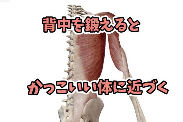 背中の筋トレをやらないのはもったいない。かっこいい体になるための背中の鍛え方のコツ